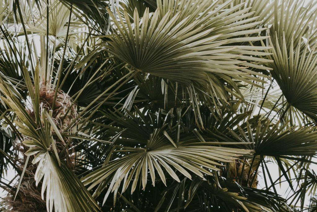 Hochzeitstrend getrocknete Palmblätter